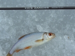 Pescuit extrem în miezul iernii